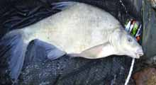 5lb bream from Lizard Fisheries April 05