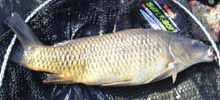 6lb common from Lizard Fisheries April 05