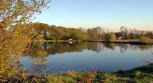 Collier Row Angling Club - Frog Street Lake, Brentwood