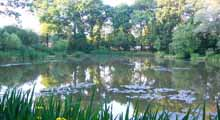 Cranleigh Angling Society - Fishery 1st Pond