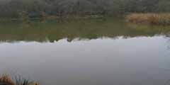 Crawley Angling Society - New Pond
