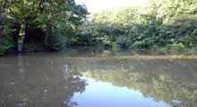 Crowborough & District Anglers Association - Scaland Wood