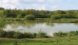 Where to fish in Surrey. Bury Hill Fisheries