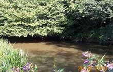 Godalming Angling Society - River Wey