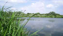 Where to Fish. Coarse fishing venues from Fish South East - Lizard Fisheries, Lake 2