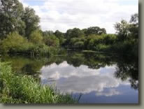 Maldon Angling Society - Rook Hall Farm