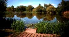 Parks Angling Club - Shoebury Lake
