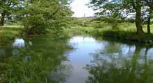 Pulborough Angling Society - River Rother