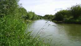 Fish South East - Royal Berkshire Fisheries