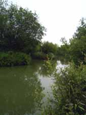 Royal Berkshire Fishery