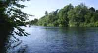Where to fish in Surrey. River Thames, Runneymede