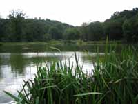Twynersh Fishery - August 05