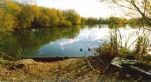 Verulam Angling Club - Smallford Pit