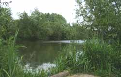 Where to Fish. Coarse fishing venues from Fish South East - Lizard Fisheries, Lake 1